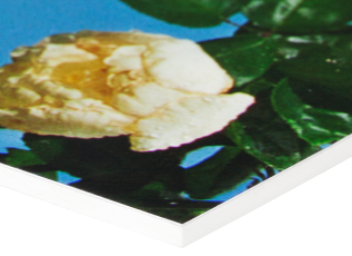 Foamex is a solid PVC mounting material used for simple, non archival purposes such as exhibition prints requiring a durable substrate for touring shows or public exhibitions. It is available in a range of thicknesses. At Metro we use 3mm and 5mm Foamex only.