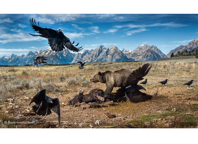 Now in it's 52nd year, the Wildlife Photographer of the Year 2016 exhibition has opened at the Natural History Museum in London, featuring winning images from the prestigious competition that this year attracted a staggering 50,000 entrants from 95 countries across the globe. The exhibition showcases Earth's most extraordinary sights; reflecting nature's beauty and diversity […]