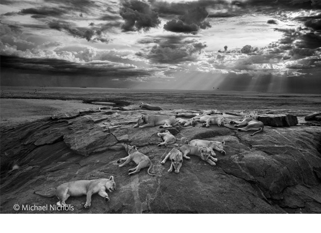 Once again the Natural History Museum pays host to the Wildlife Photographer of the Year Exhibition, now celebrating its 50th year.  The competition provides a global showcase of the very best nature photography and this year saw American photographer Michael Nichols named Wildlife Photographer of the Year 2014 for his serene black-and-white image of lions […]