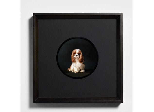 "Metro is thrilled once again to be working with London based photographer Bettina von Zwehl on her latest project which takes an alternative look at dog portraiture.  She explains, ""Dogs represent so much more to us than we could ever be aware of.  A psychoanalyst friend once told me that dogs rescue us as much […]"