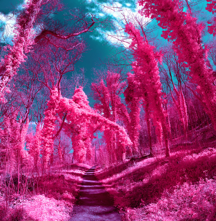 An arboretum, in the general sense, is a botanical collection composed exclusively of trees. In this case,the group exhibition will presentvaried photography practices, including the exploration of lighting, film and digital processes, to produce a contemporary photographic arboretum at Lucy Bell Gallery, East Sussex. The installation aims to represent how our relationship with nature is […]